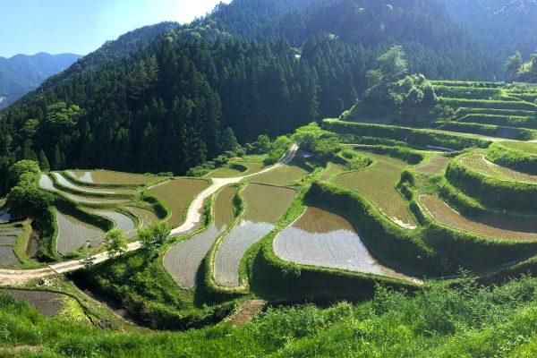 Rizières en terrasse dans le village de Kamikatsu au Japon. © Cherise Fong