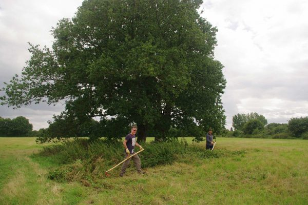 Scything training around the oak trees at The Big Raise. © Blanche