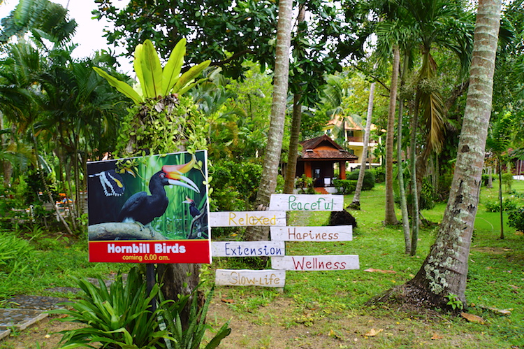 The Thai Island And The Biopirates Makery