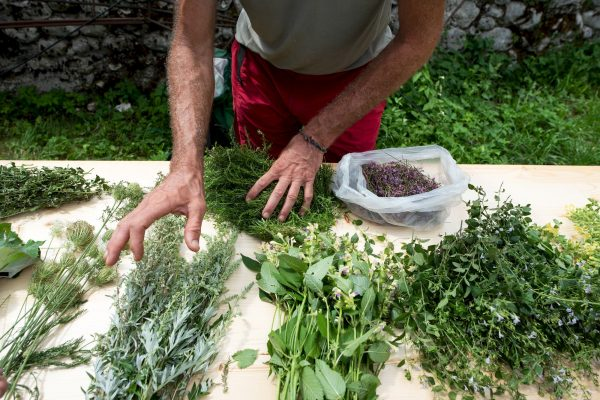 Foraging at PIFcamp with Dario Cortese © Katja Goljat