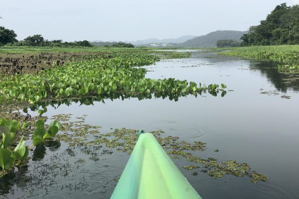 Looking back at Gamboa from the Chagres river in Panama. © Cherise Fong